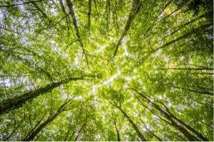 SAP Co-CEO Accepts CEO Carbon Neutral Challenge